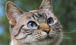 Dreams about Cats: 29 Types and Their Meanings