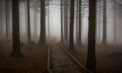 Fear In Dreams: 17 Types and Their Meanings