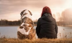 Dreaming of a Deceased Pet: 16 Types & Their Meanings