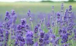 Scent Dream: 16 Types & Their Meanings