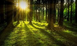 Forest Dream: 31 Types & Their Meanings