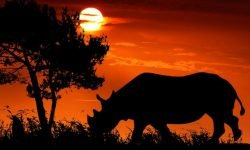 Rhino Dream: 22 Types & Their Meanings