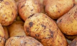 Dream of Potatoes: 14 Types & Their Meanings
