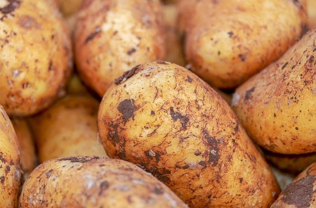 Dream of Potatoes