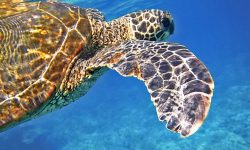 Dreams About Sea Turtles: 14 Types & Their Meanings