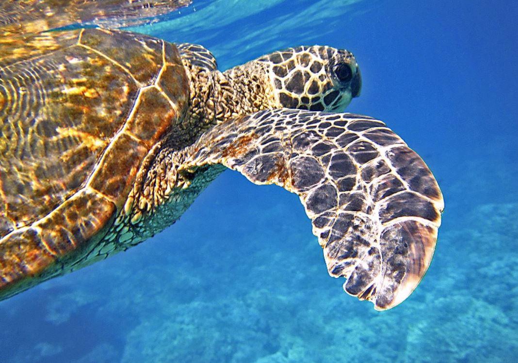Dreams About Sea Turtles