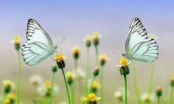 Dreams About Insects: 13 Types & Their Meanings