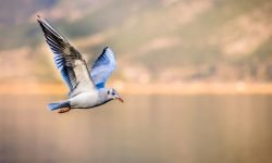 Dreams about Birds: 18 Types & Their Meanings