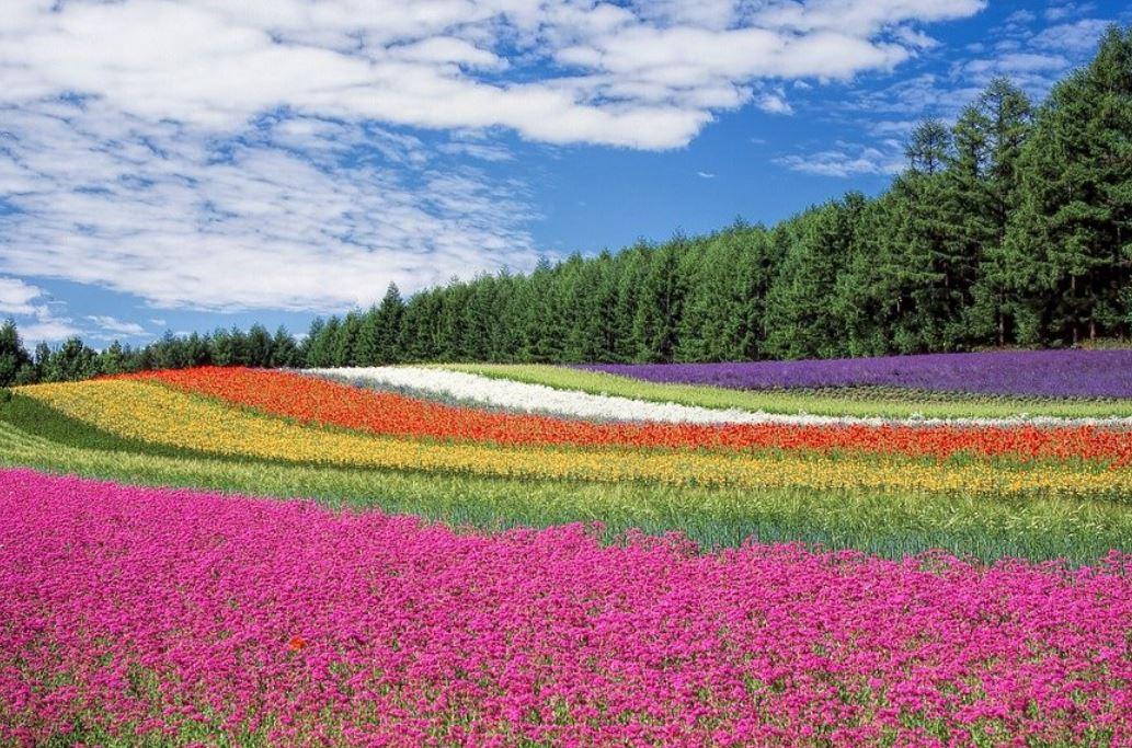 Dream About Colors